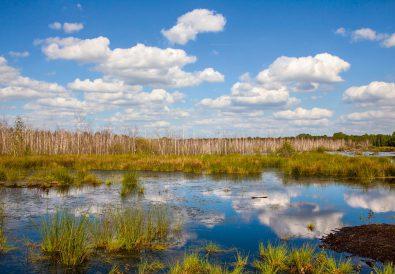 """Das """"Tote Moor"""" im Naturpark Steinhuder Meer"""